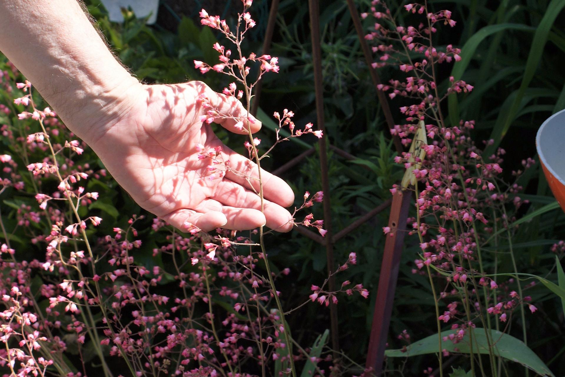 Visite de jardin fleuri à Bollwiller