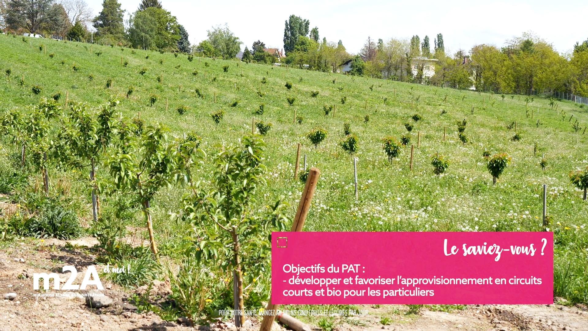 webserie-Pfastatt-ferme-du-chateau-bio-verger