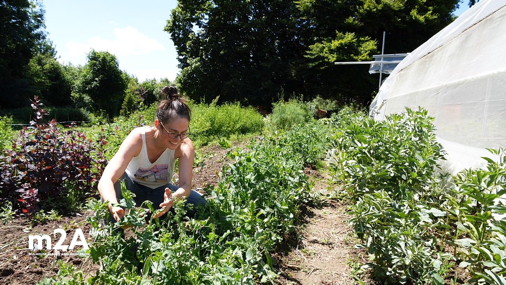webserie-flaxlanden-Line-schurrer-innatendu-jardin