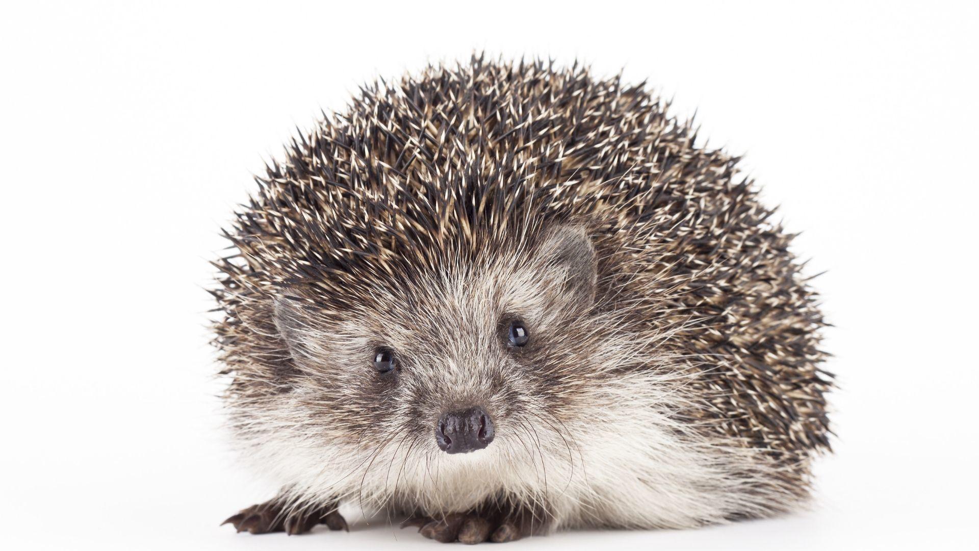 Natur-e : ces petites bêtes qui nous veulent du bien | Mulhouse Alsace Agglomération – m2A