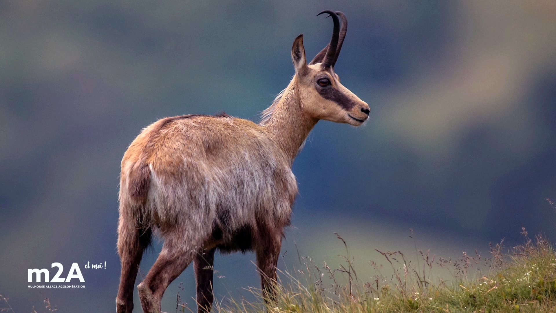 Photo d'Eric Rapp, photographe animalier à Berrwiller