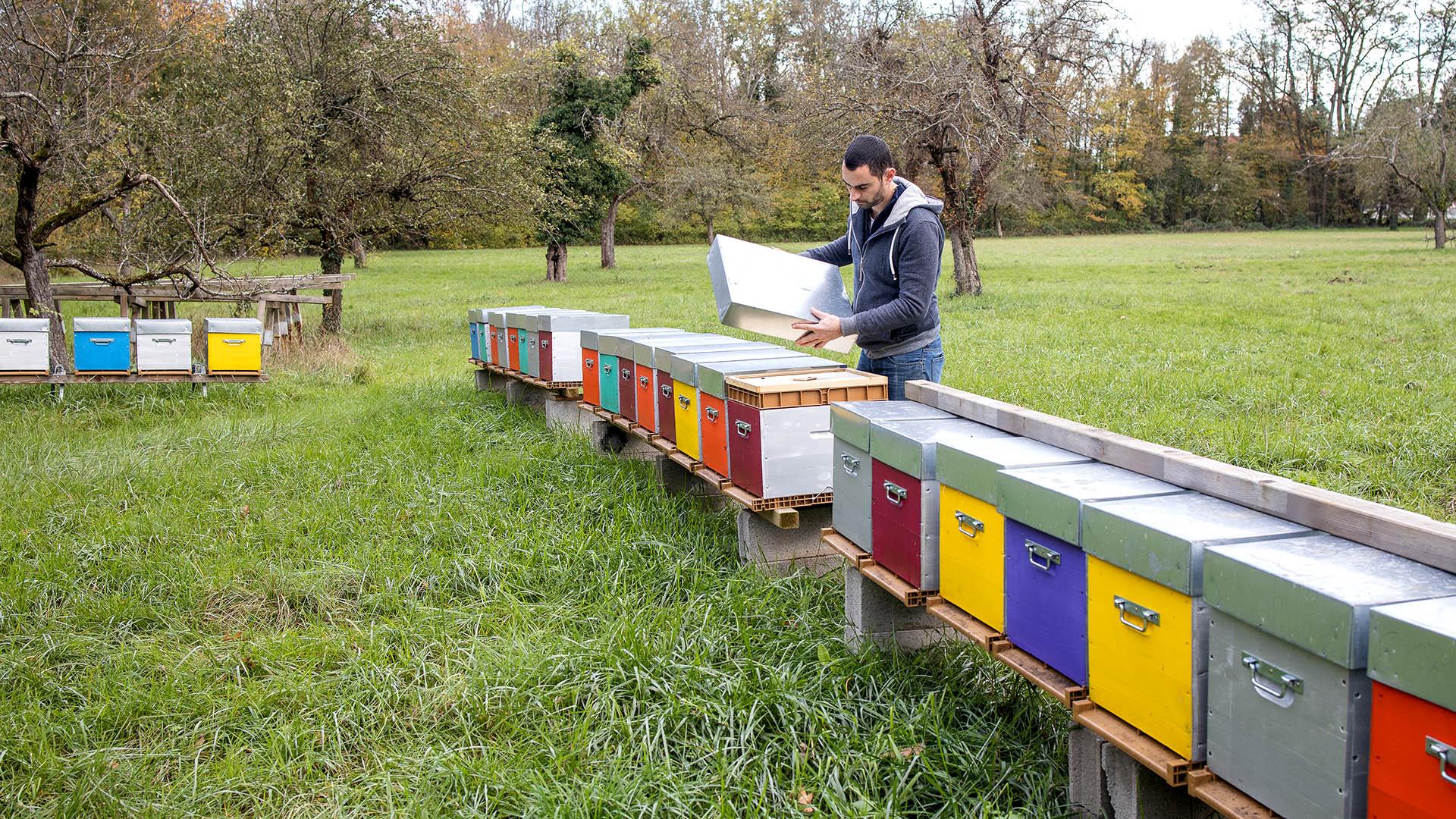 L'apiculteur à l'oeuvre