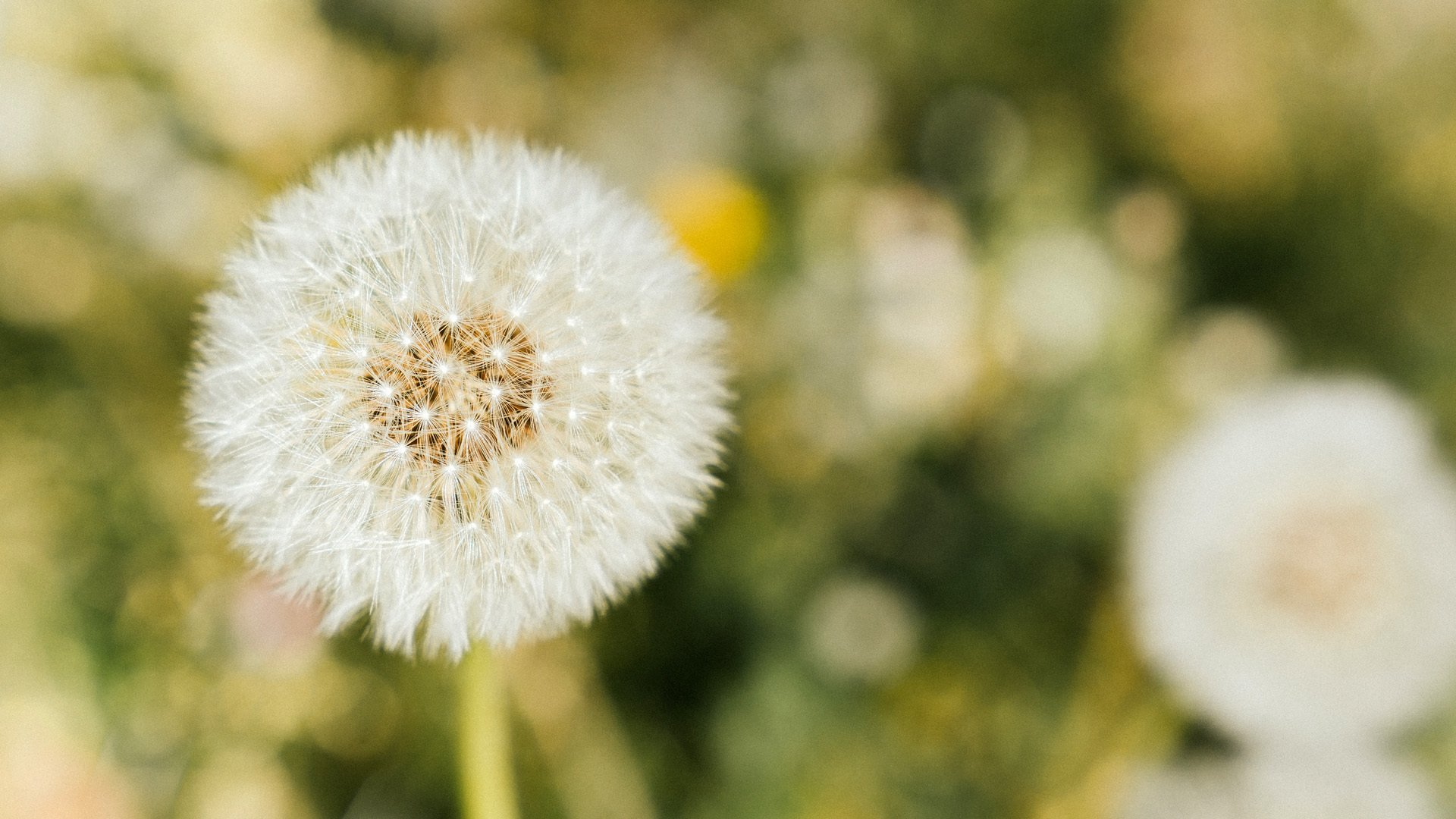 C'est beau, le printemps, dans l'agglo #m2A