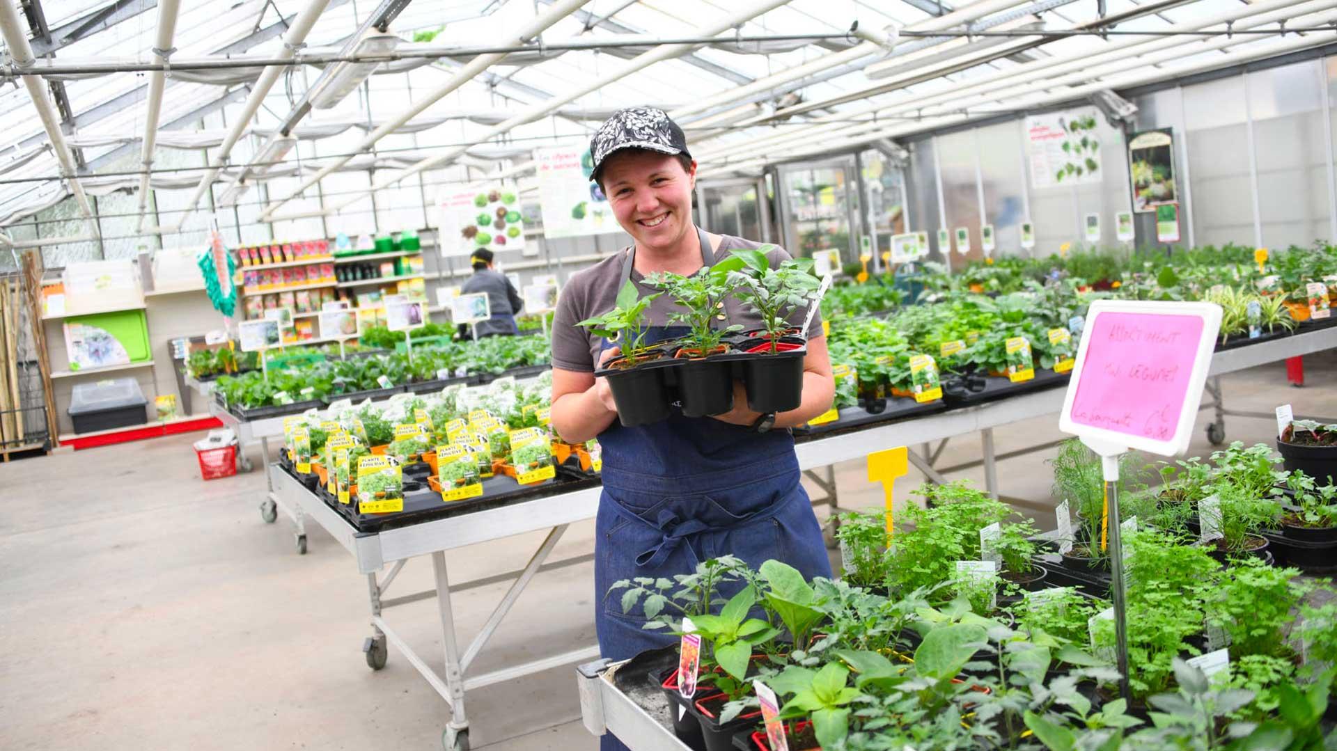 Les plantes de potager sont disponibles !