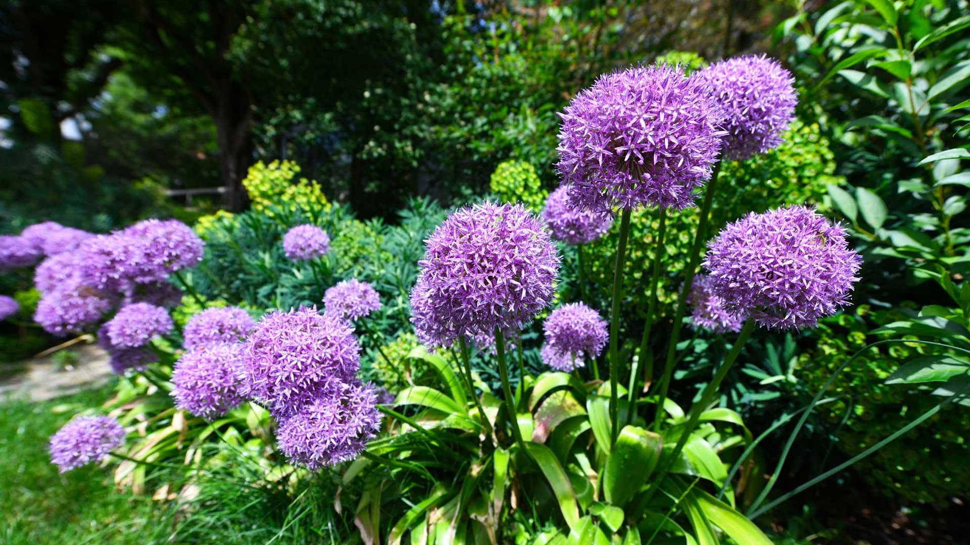 Les plantes colorées du jardin botanique !