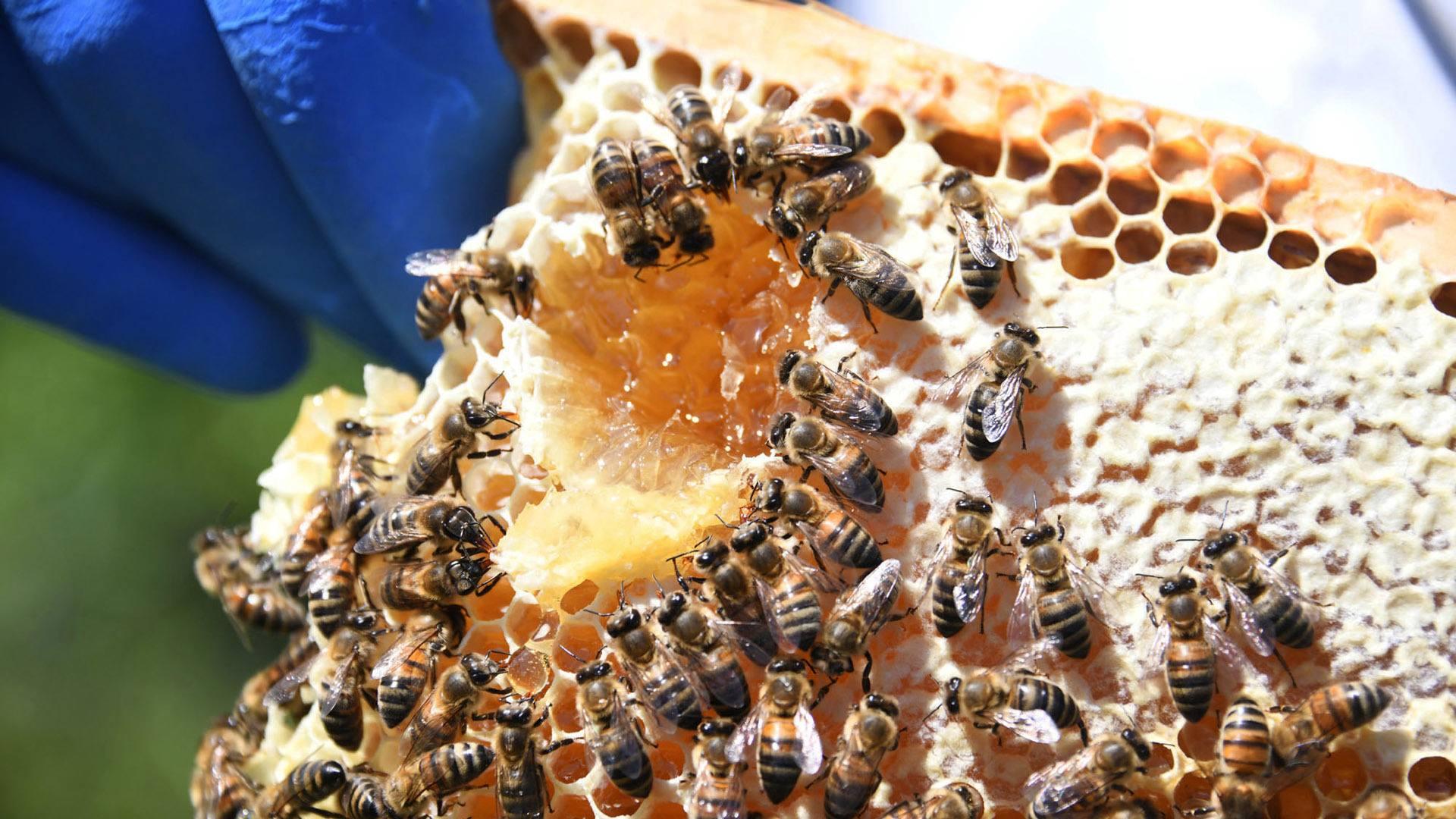 Conçu pour les abeilles
