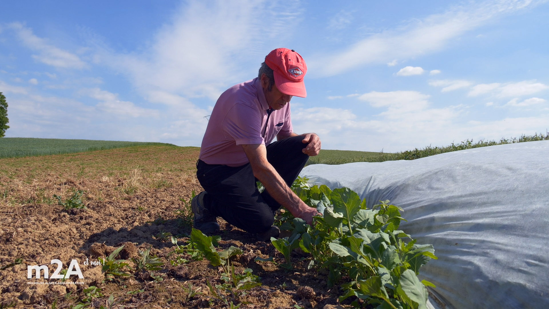40 hectares de terres saines
