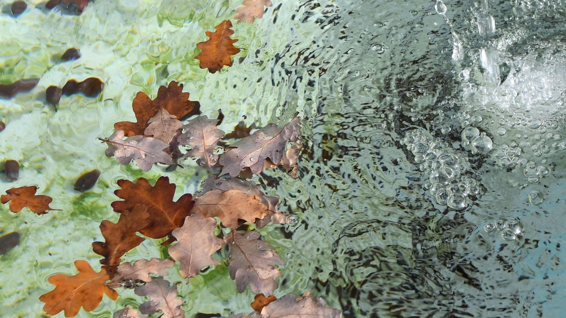 C'est beau l'agglo en automne © Catherine Kohler