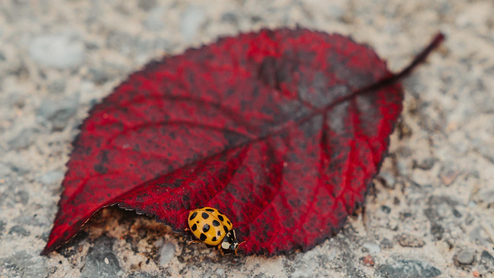C'est beau l'agglo en automne © Marie Nussbaumer