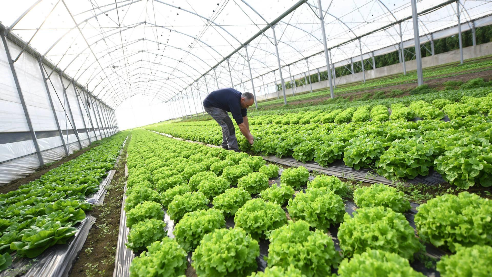 Zimmersheim un distributeur automatique pour la ferme Fischer : des achats en toute autonomie : des produits frais aux saveurs incomparables