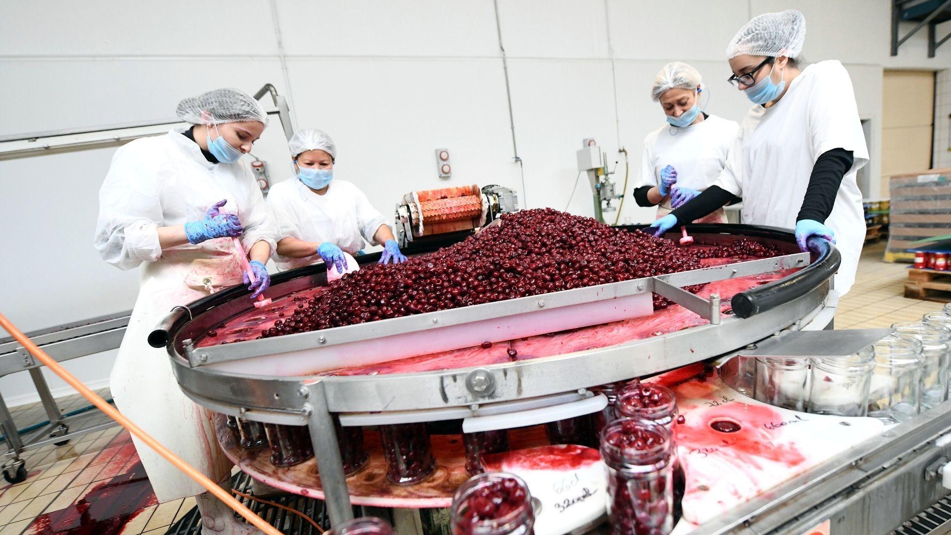 Pfastatt les confitures Beyer s'exportent à l'international : les fruits sont triés à la main